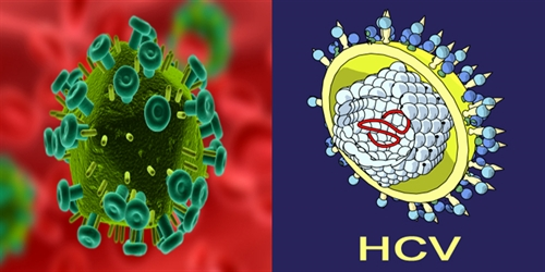 hiv and hcv